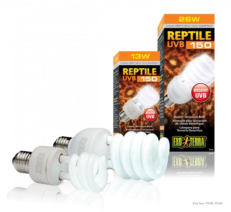lampe tortue de terre