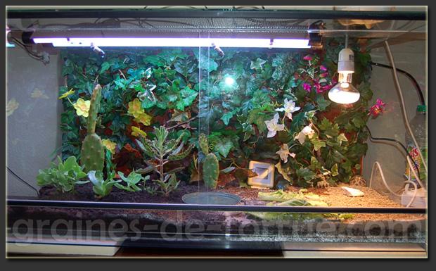 aquarium pour tortue terre. Black Bedroom Furniture Sets. Home Design Ideas